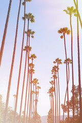 Palm trees with vintage instagram effect