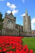 Saint Patrick's Cathedral in Dublin - 118690481