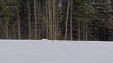 winter panorama of the forest. drone video