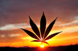 Silhouette of cannabis leaf at sunrise