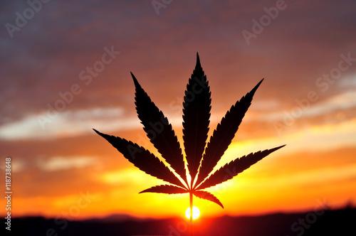 Silhouette of cannabis leaf at sunrise