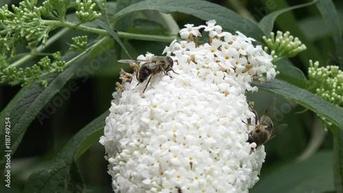 Zdjęcia na płótnie, fototapety, obrazy : Bee on Flower in the nature