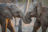 Słonie grające w Krugerze.