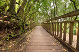 Pathway in Tropical forest, Anaga, Tenerife, Canary island, Spain.