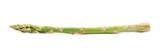 Single spear of asparagus isolated