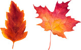 Fototapety Autumn watercolor leaves. Fall illustrations.