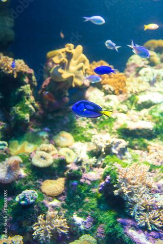 Poster aquarium