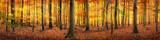 Wald im Herbst Panorama Hintergrund