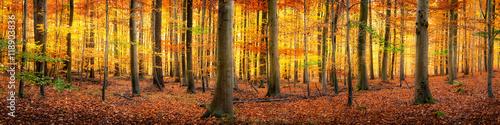 Papiers peints Miel Wald im Herbst Panorama Hintergrund