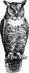 Vintage image silhouette owls