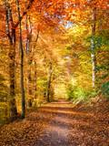 Lichtdurchfluteter Waldweg im Herbst