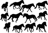 twelve black horses on white