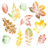 Collection of autumn leaves imprints - 118966212