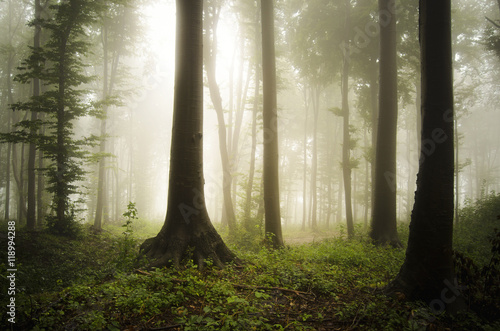 forest landscape in sunlight