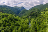 Forest reserve in Montenegro