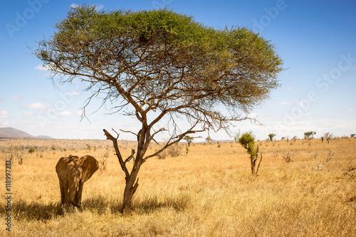 Plagát, Obraz Elefant unter Baum