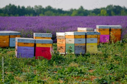 Zdjęcia na płótnie, fototapety, obrazy : Bee hives in Provence, France