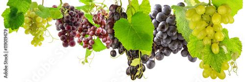 Fototapeta grappes de raisins et feuilles de vigne, fond blanc