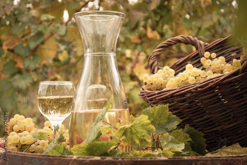 Fototapeta white wine vineyard autumn season
