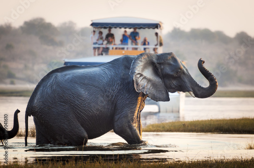 Tourists watching an elephant crossing a river in the Chobe National Park in Bot Poster