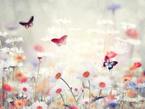 Plagát, Obraz wild flowers in a meadow