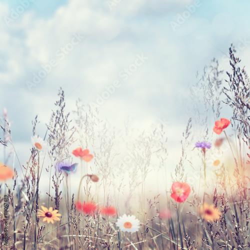Obraz Field with wild flowers