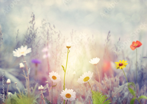 Field with wild flowers Poster
