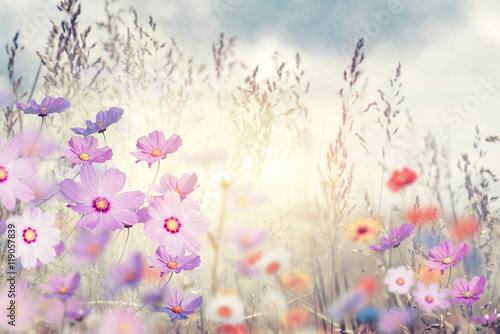 Fototapety, obrazy :  wild flowers at sunset