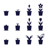 pot flowers icons showing levels of their growth and development