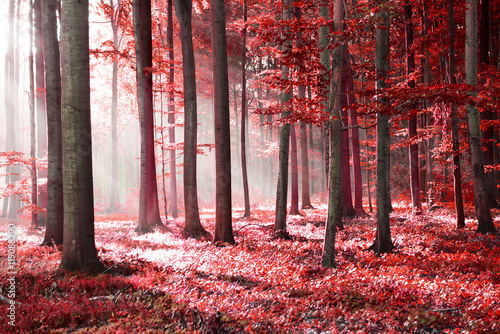 Obraz Red forest abstraction