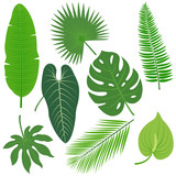 Tropical plant leaves vector collection. - 119123088