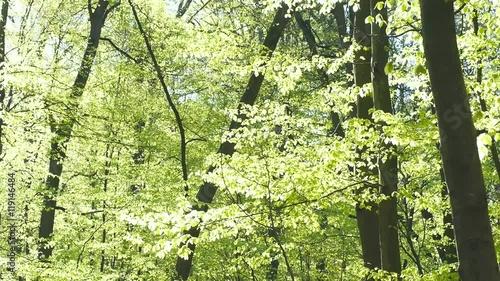 Tuinposter Weg in bos Buchenlaubwald im Frühling