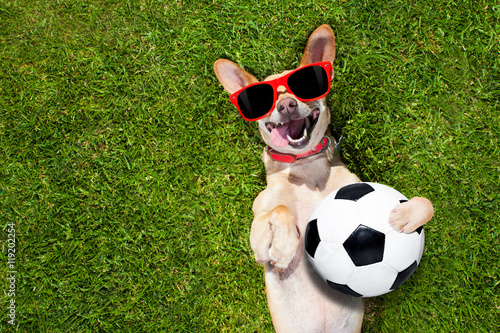 Poster dog plays with soccer ball