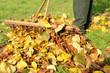 Herbst 152