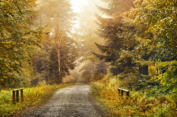 Magic dark forest. Autumn forest scenery with rays of warm light © alekosa