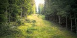 Mystischer Geisterwald