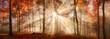 Besondere Lichtstimmung in einem nebligen Wald im Herbst, Panorama Format