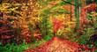 Bunter Wald im Herbst lädt zu einem Spaziergang ein