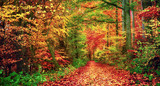 Fototapety Bunter Wald im Herbst lädt zu einem Spaziergang ein