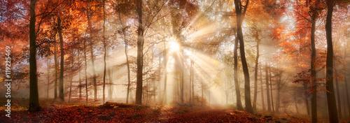 specjalne-oswietlenie-w-mglistym-lesie-jesienia