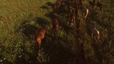 Horses walking on grass. Horse herd is slowly moving. Follow the leader. Dont give up on halfway.