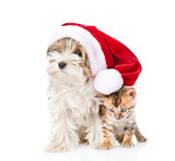 Cute Bengal cat and Biewer-Yorkshire terrier puppy with red santa hat. isolated on white