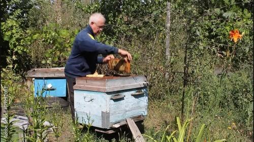 Zdjęcia na płótnie, fototapety, obrazy : The beekeeper regularly inspects the bee family.