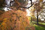 Pianta con foglie arancio in un giardino in Autunno