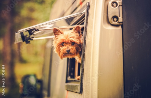Poster RV Travel with Dog