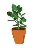 Leafy pot plant