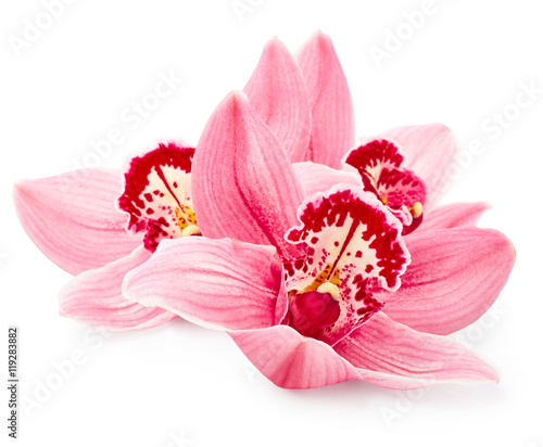 Orchid flowers - 119283882