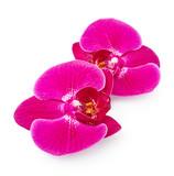 Fototapety Purple orchid flowers
