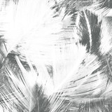 Abstract creative background from feather.