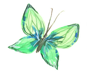 Isolated watercolor green butterfly on white background. Beautiful fragile creature for decoration.
